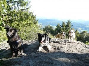 Urlaub mit Hund Bayern, Bayer. Wald