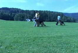 Große Hundeplätze