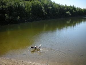 Badender Hund