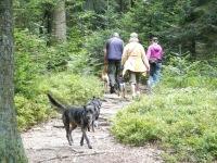 Wandern mit Hund im Bayerischen Wald